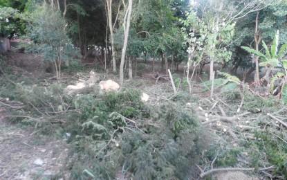 Administração municipal de Angatuba prova mais uma vez ser depredadora da natureza