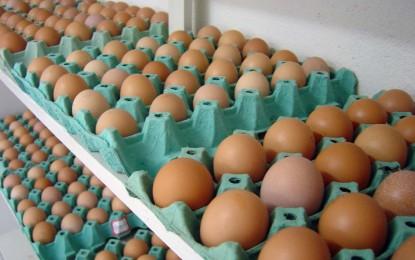 Prefeitura de  Angatuba promove festa de milhões mas não paga os fornecedores  de ovos