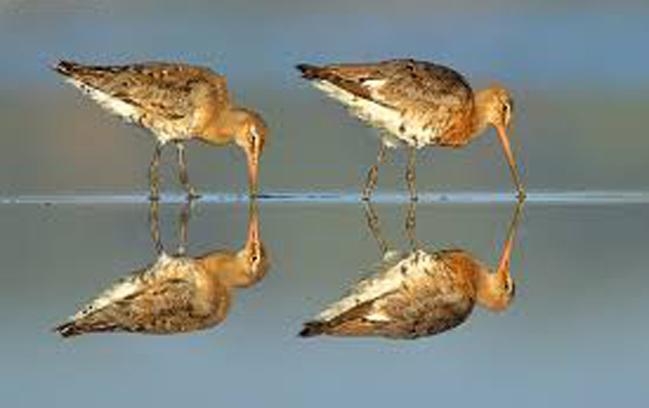 simetrias-foto