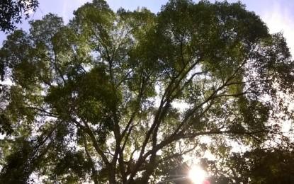 As árvores têm algo a dizer