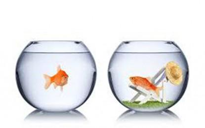 Reflexão sobre a inveja