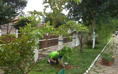 Corte de árvore em Angatuba ocorreu por questão de risco e foi permitido por laudo técnico