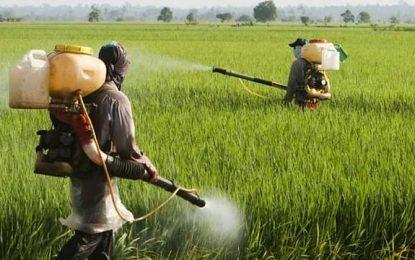 Anvisa: mais da metade dos vegetais está contaminada com veneno